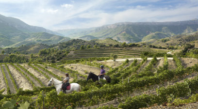 Wine tourism routes designed for you