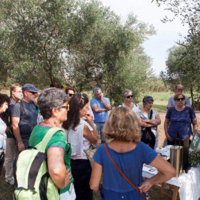 OLIVE Oli de Ventalló. Visita degustació olivar i vinya