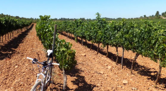 The bicycle: wine tourism on two wheels in Bages