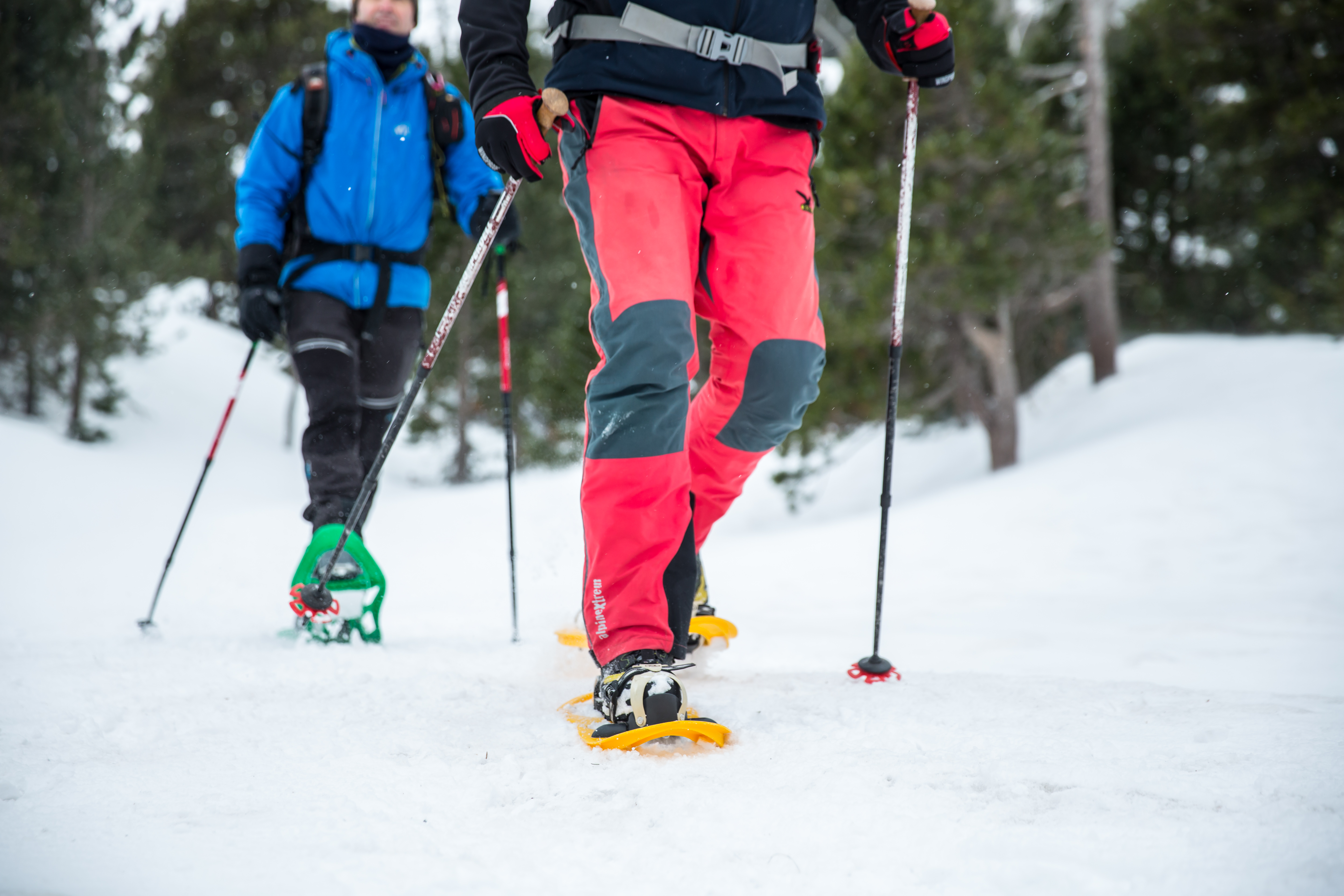Snowshoeing excursions, sport and nature in their purest form.