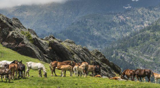 Rutes senderistes d'un dia pels Pirineus de Catalunya