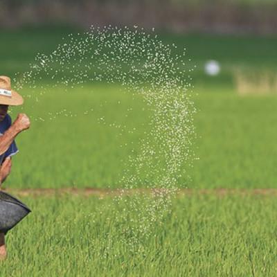 Els imprescindibles gastronòmics del Montsià: l'arròs i els musclos