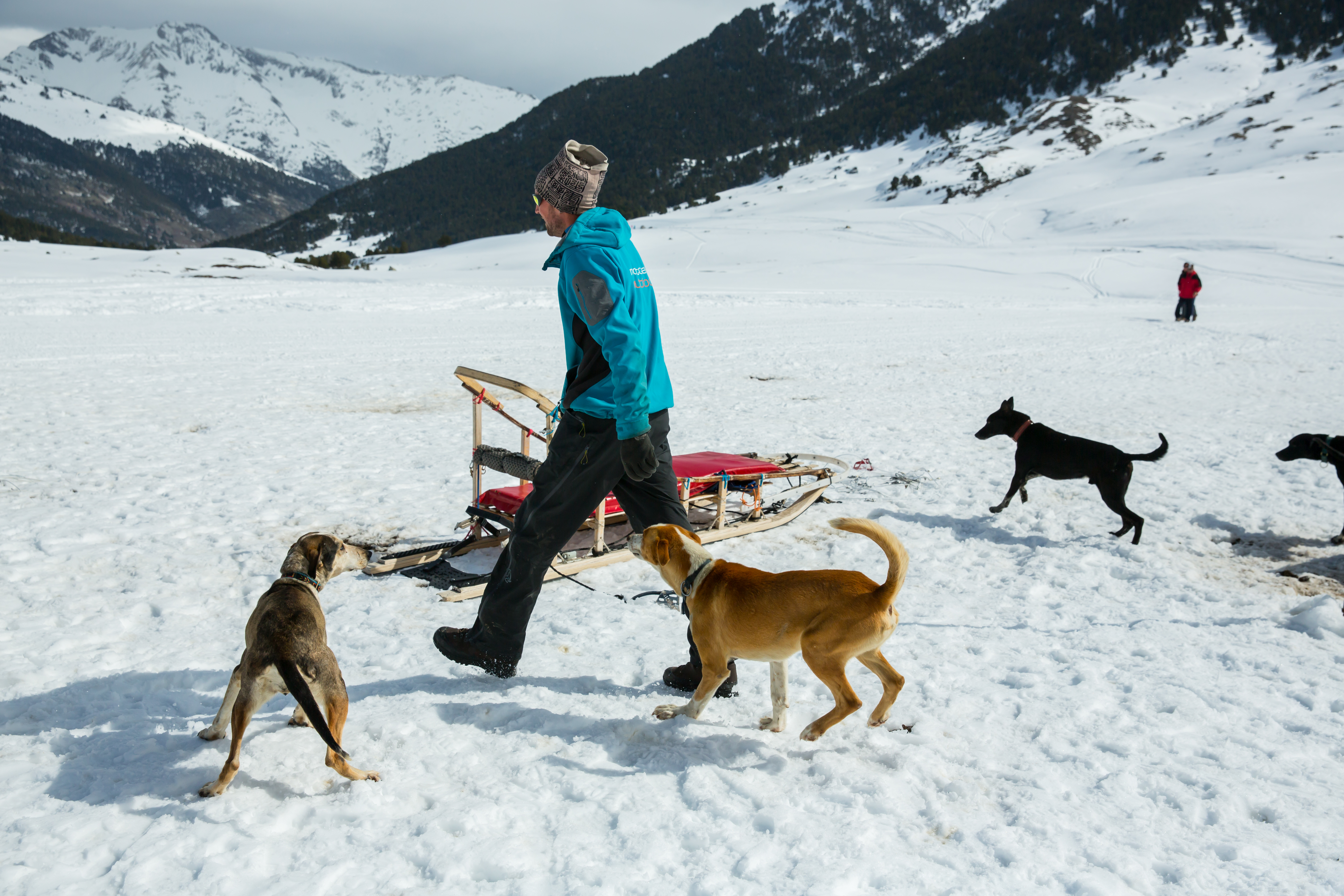 The Montgarri Outdoor musher and dogs.